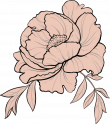 illustration of a peony